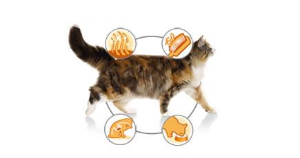 Сухой корм: Для кошек с чувствительной кожей