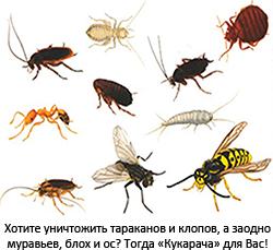 Хотите уничтожить тараканов и клопов, а заодно муравьев, блох и ос? Тогда Кукарача для Вас!