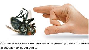 Острая химия не оставляет шансов даже целым колониям агрессивных насекомых